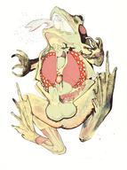 Frosch. 2011