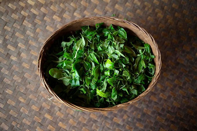 תה סיני