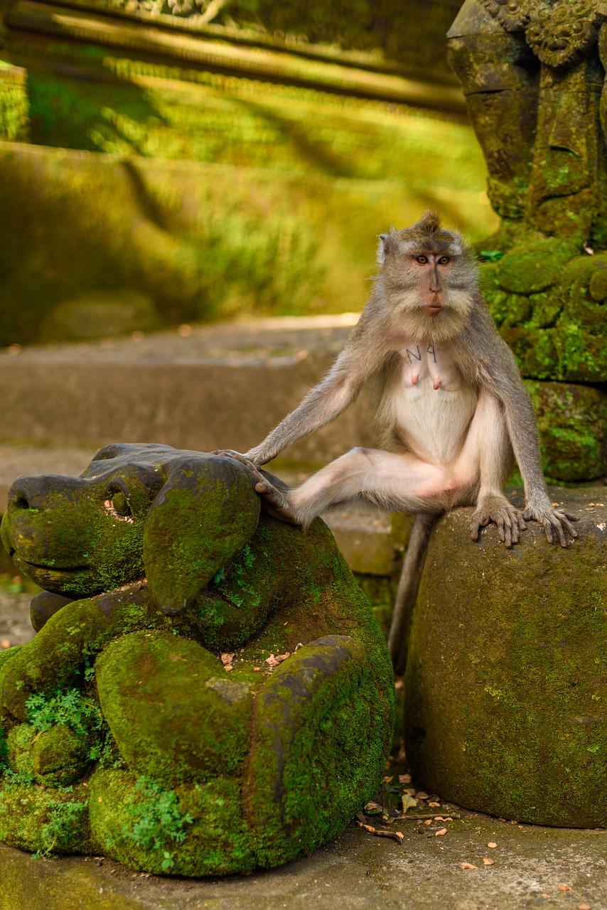 19. Monkey Forest