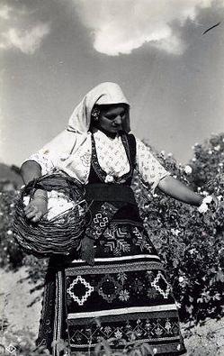 Rose Picking in Bulgaria