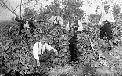 Bulgarian Vineyard for Sale