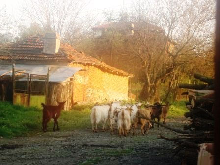Rural Bulgarian Villages - Property for sale