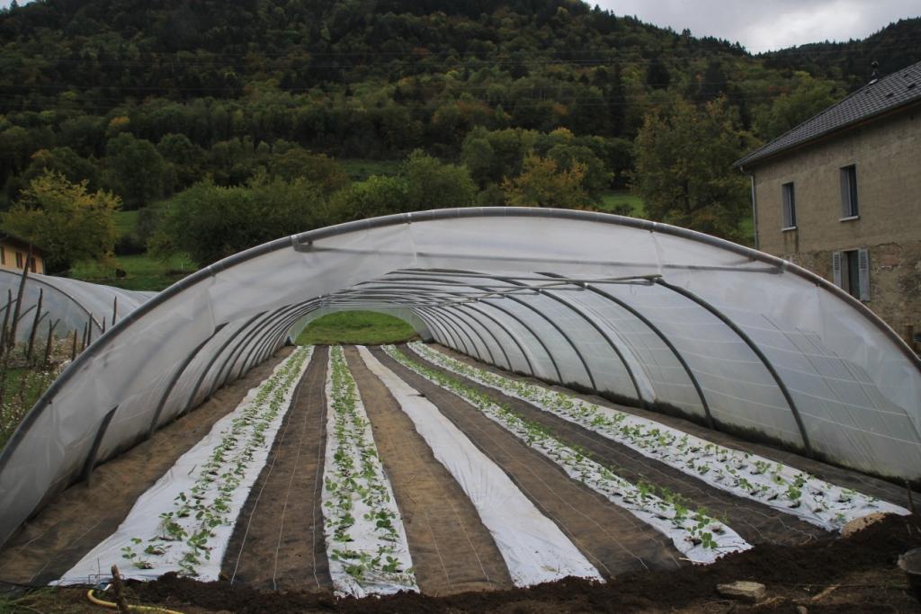 Le premier tunnel de fraises