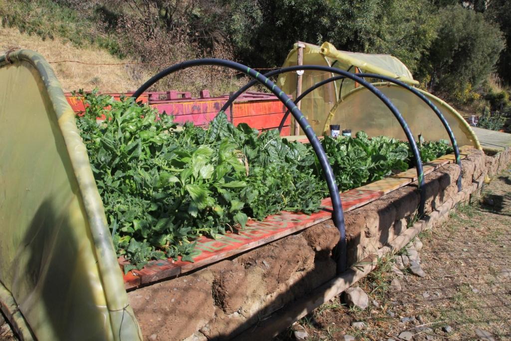 Jardin communautaire, La Paz