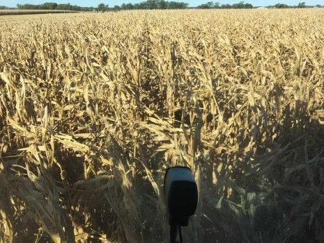 danner-farms-field-465x350.jpg