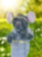 Pepper web profile.jpg