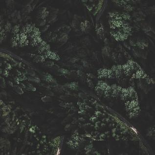 Premiere: Heavenly Stems - Florals [Algebra Records]