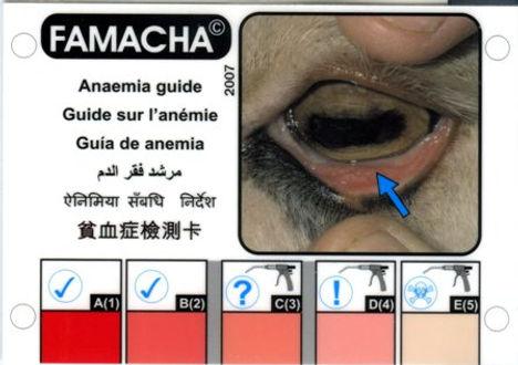 FAMACHA #2.jpg
