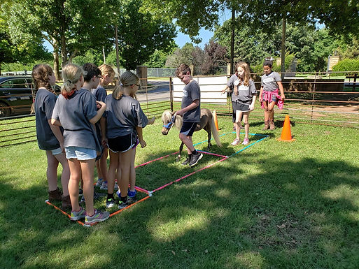 Gallop to Greatness: Tactical Teamwork