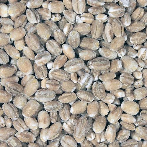 organic pot barley. close up. zero waste bulk foods. plastic free. online. horsham. sussex