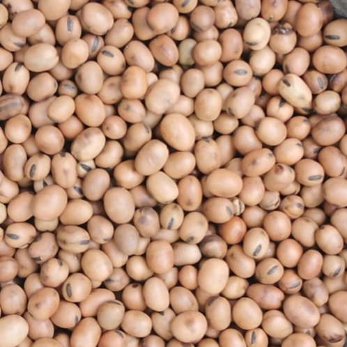 british grown Organic fava beans. plastic free. zero waste. horsham. Sussex