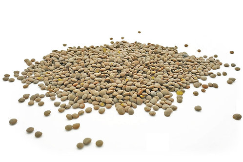 british grown organic olive green lentils. plastic free. zero waste bulk foods. horsham. dorking. surrey. sussex. online