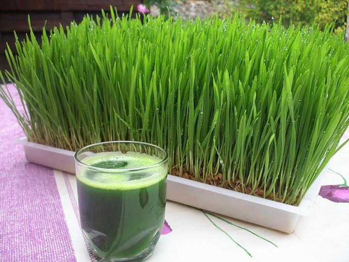 Wheatgrass Heals All