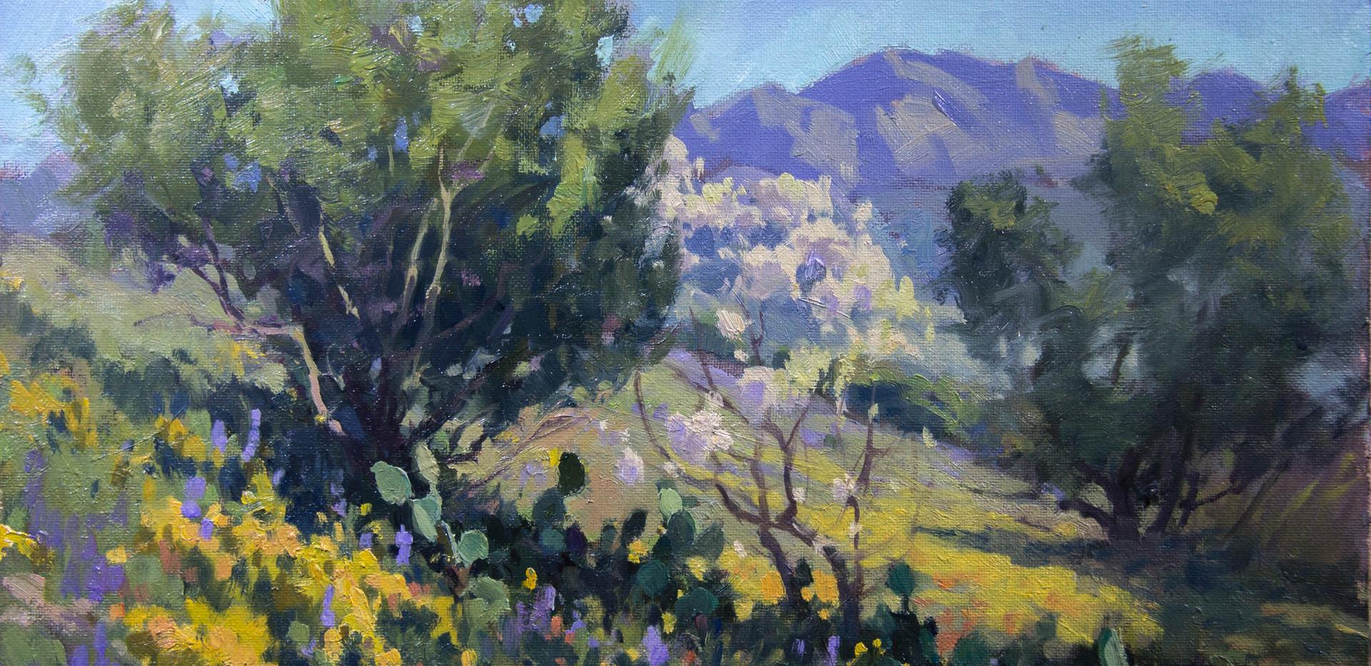 Tucson Spring 9x12.jpg