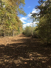 Land clearing Austin