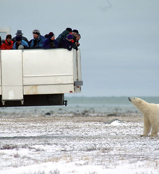 Polar Bear vehicle11918_4dc8eeab-73b7-44