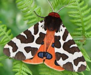 Moths as Inspo... I'm into it.