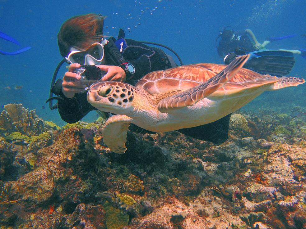 buceo_scuba_snorkel_diving_vivescuba_tortuga_04