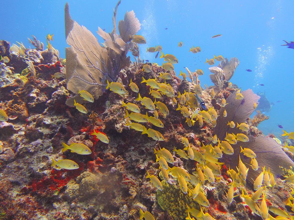 buceo_scuba_snorkel_diving_vivescuba_arrecife_03