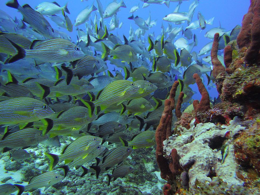 buceo_scuba_snorkel_diving_vivescuba_peces_02