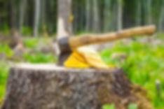 Stump-Removal-Near-Me.jpg
