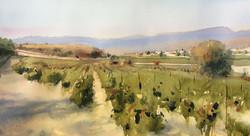 Vineyards under Puimisson