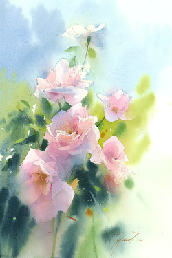 Sunlighted Roses