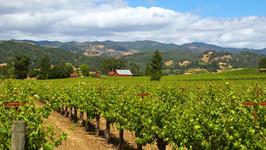 wine_country_vineyards_summer_alexander_