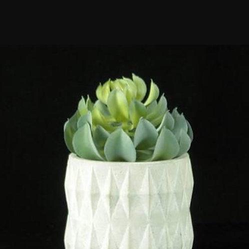 Suculenta c/ Broto Vaso Facetado