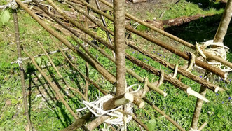 Making rope from trees - withies