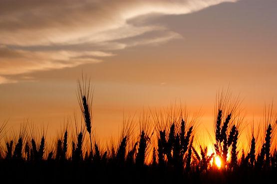 SunsetGrain-JW.jpg