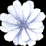 Blue%20Flower%20Front_edited.png