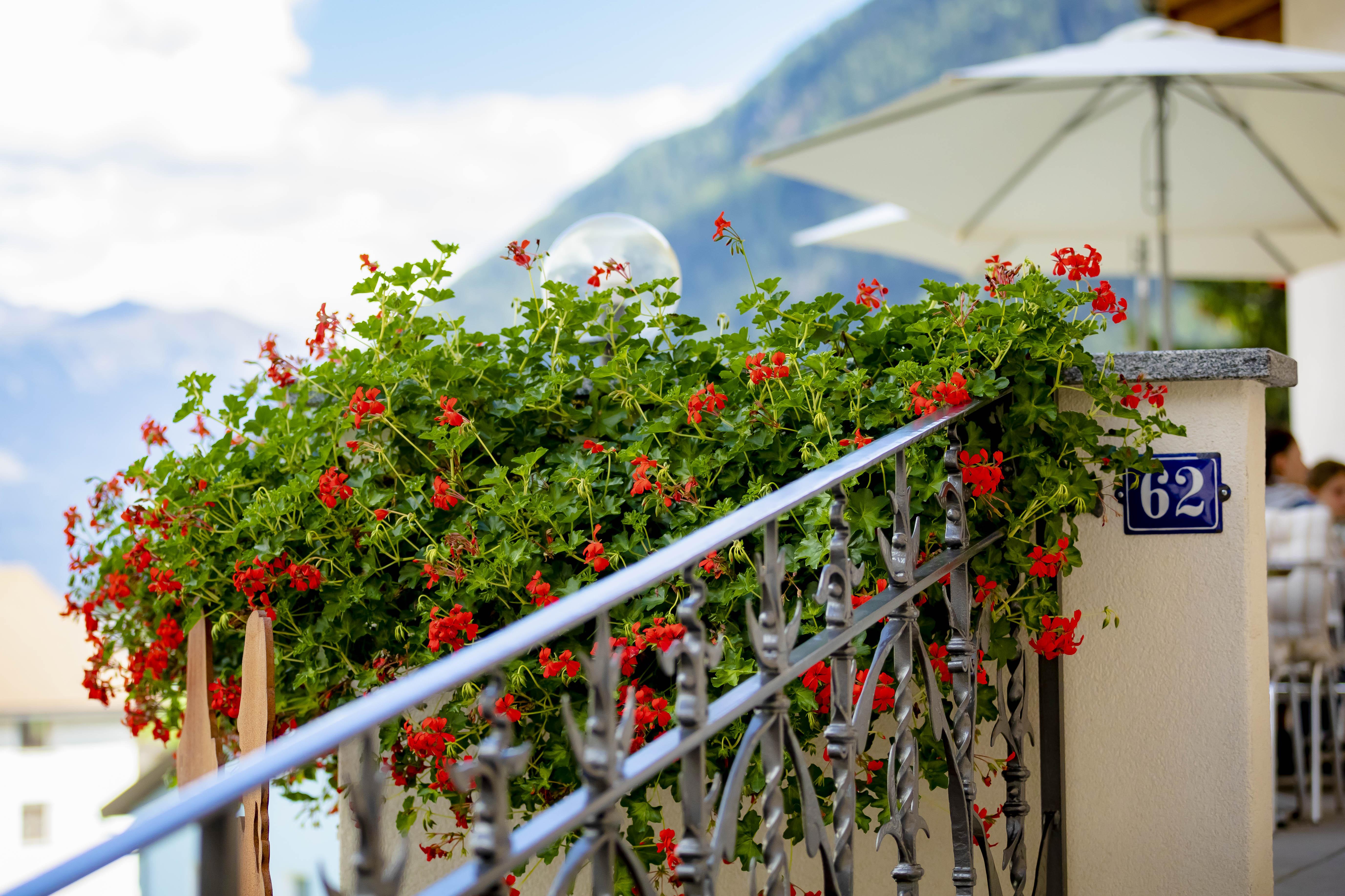 Geranien auf der Terrasse