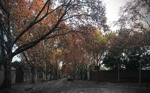 Clydesdale Autumn.jpg