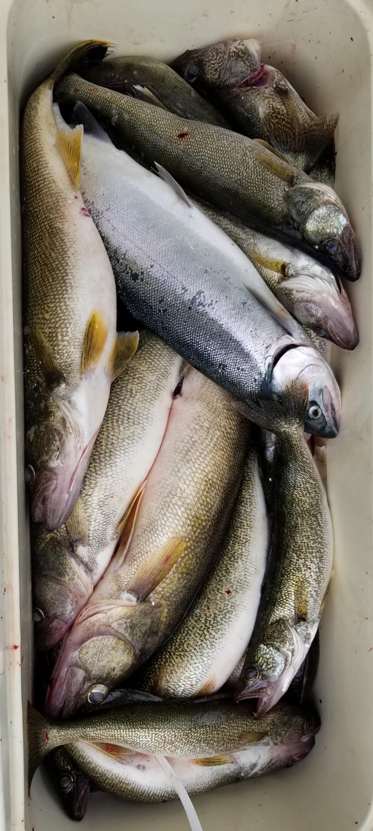 Full Day Fishing Trip (6 anglers)