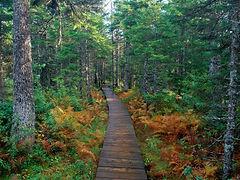 New Brunswick_芬迪國家公園.jpg