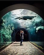 Manitoba_阿西尼博因動物園.jpg