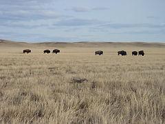 Saskatchewan_草原國家公園.JPG