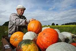 萬聖節Pumpkins on the prairies, Alberta.jpg