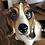 Thumbnail: Beagle i engelsk porselen