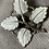 Thumbnail: Aksel Holmsen brosje i sølv og emalje
