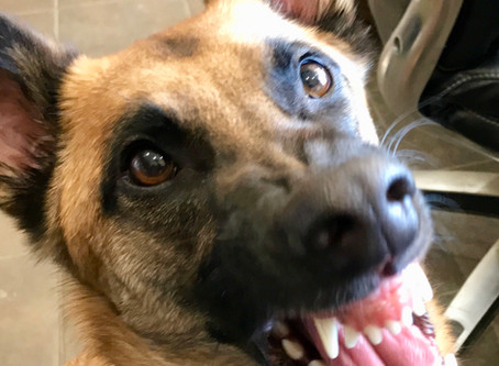 Keeping Your Dog's Teeth Pearly White!