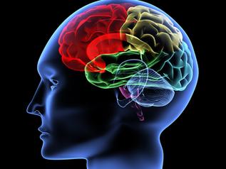 La santé de notre cerveau : la neuro-plasticité