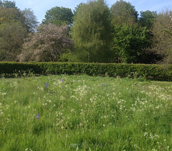 Wild flower meadow May 2015