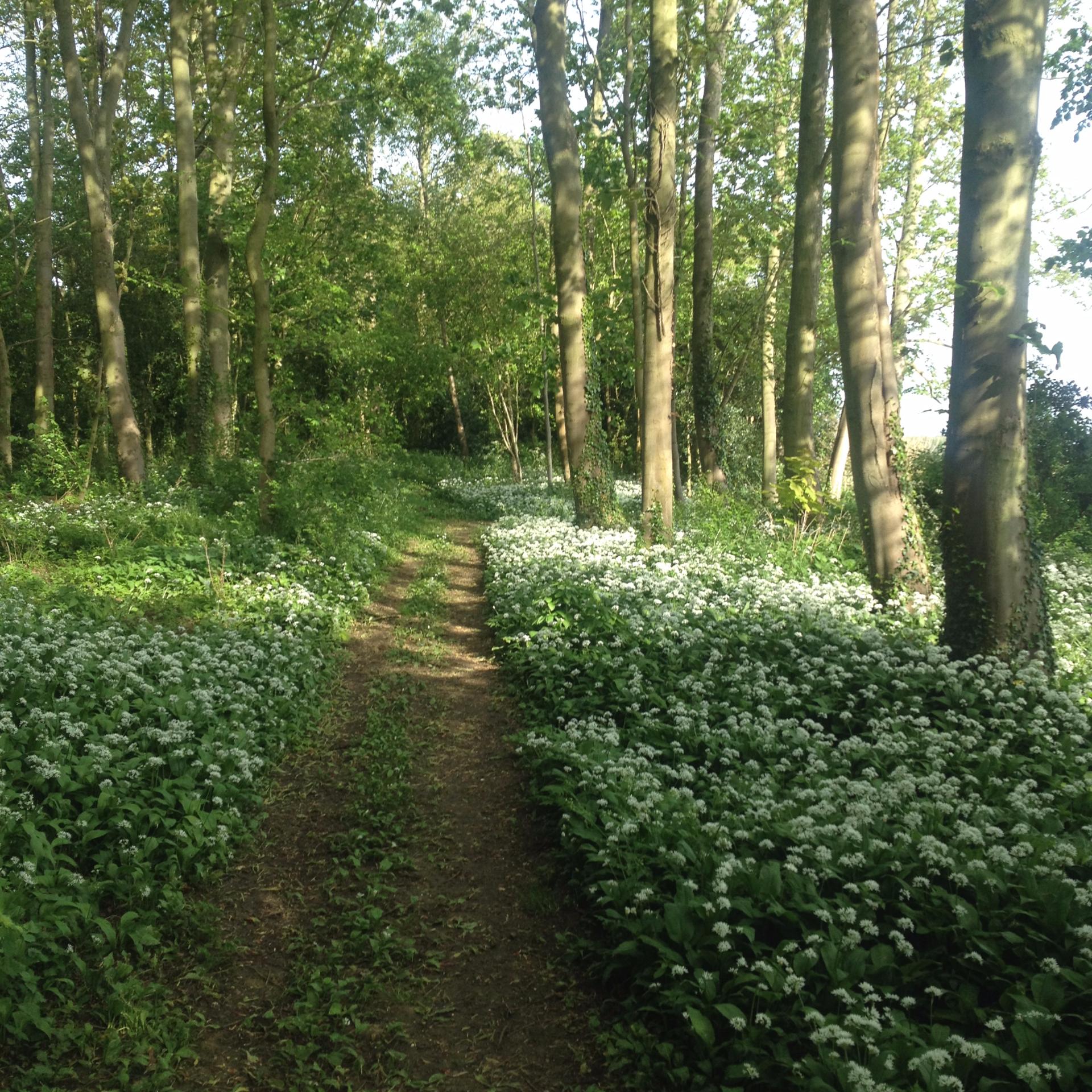 Woodland walk April 2015
