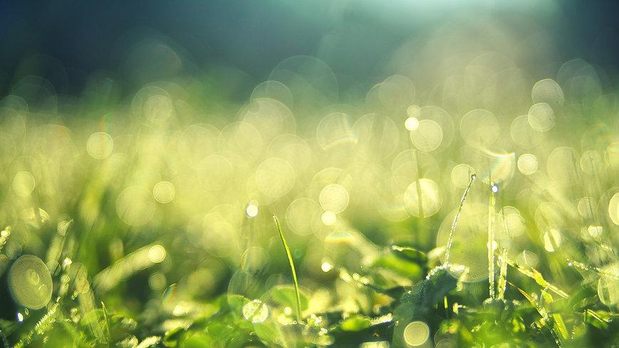 meadow-3743023_1920.jpg