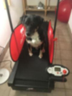 Hundelaufband für aktives Bewegungstraining