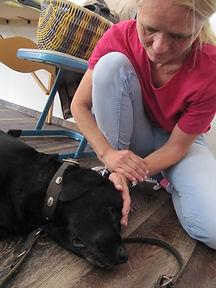 Osteopathie, Hundeosteopathie, Blockaden lösen, Hund lahmt
