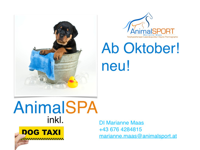 Bald geht es los mit meinem neuen Projekt: AnimalSPA