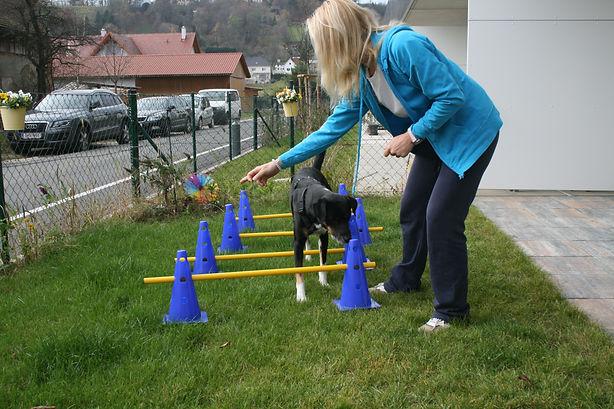 Tierphysiotherapie, Aufbautraining, Tierarzt, Hund lahmt, Cavaletti